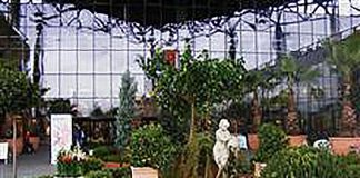 Amenajări Interioare și Exterioare Cu Plante Magnolia Blog
