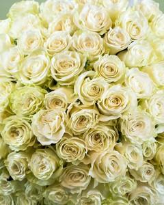 1374844087Buchet_101_trandafiri_albi_1