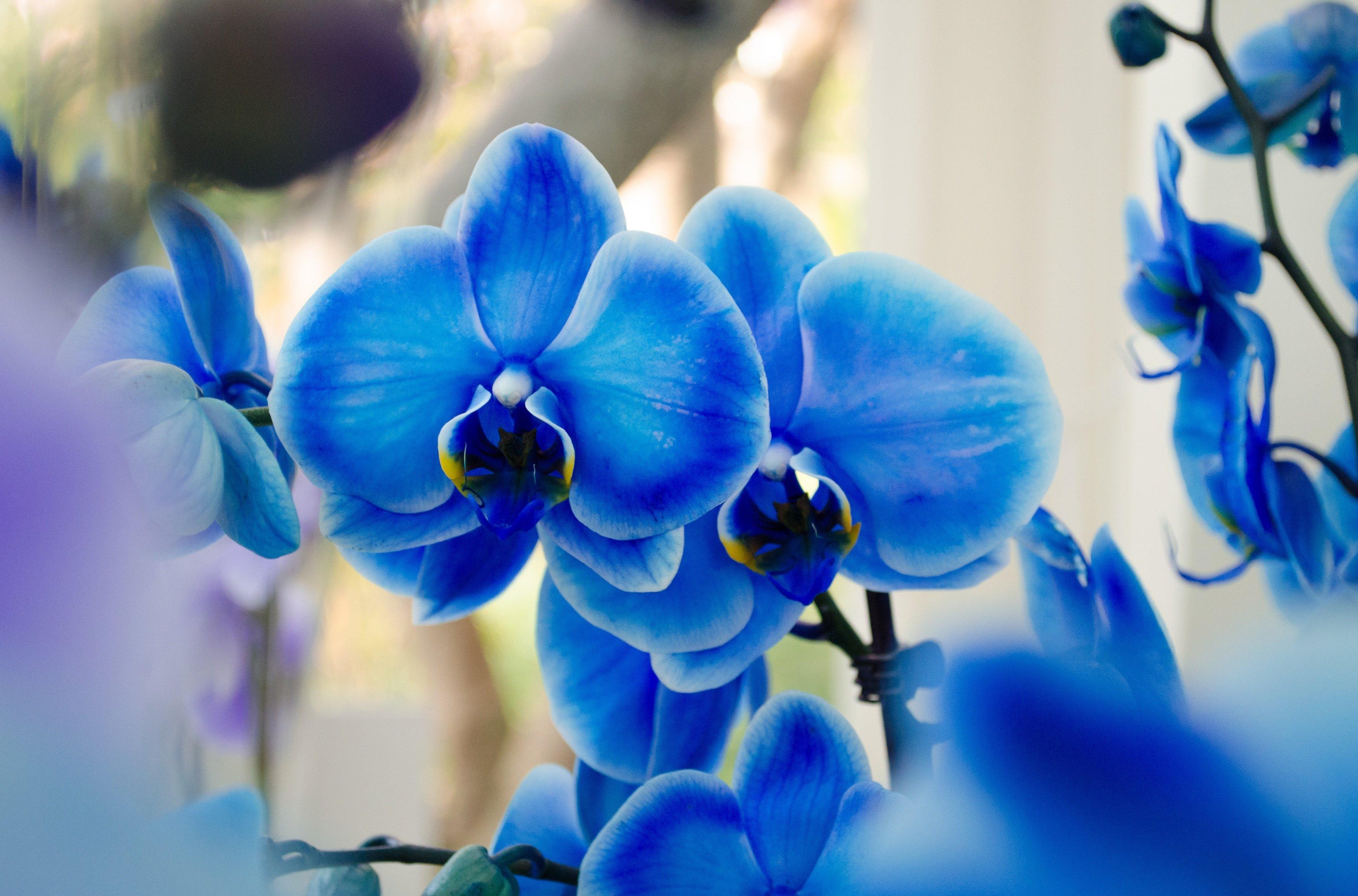 Secretul Orhideelor Albastre Magnolia Blog