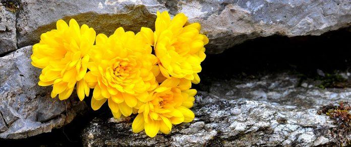 Ce flori prefera femeile din zodia Fecioara