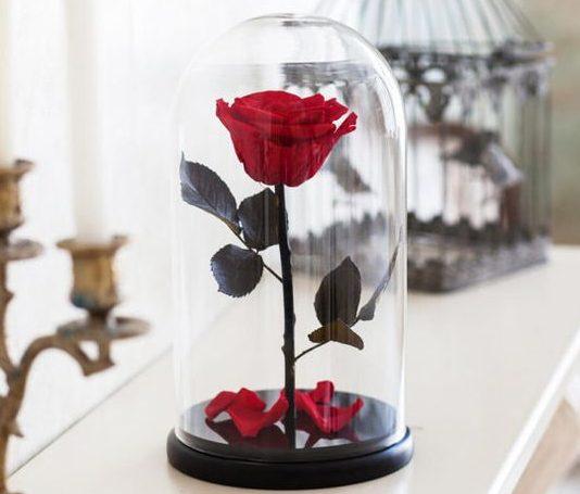 Trandafirii Criogenati in Cupola de Sticla