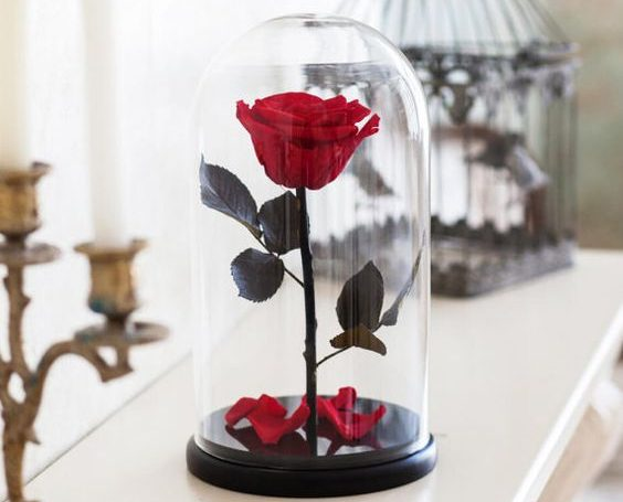 Rosas criogénicas en la cúpula de cristal