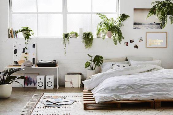 Imagini pentru plante de dormitor