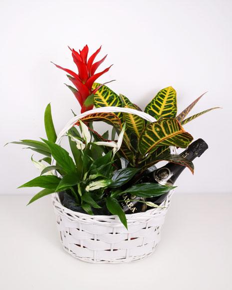 Cos cu plante si vin spumant