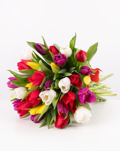 Multicolored tulips bouquet