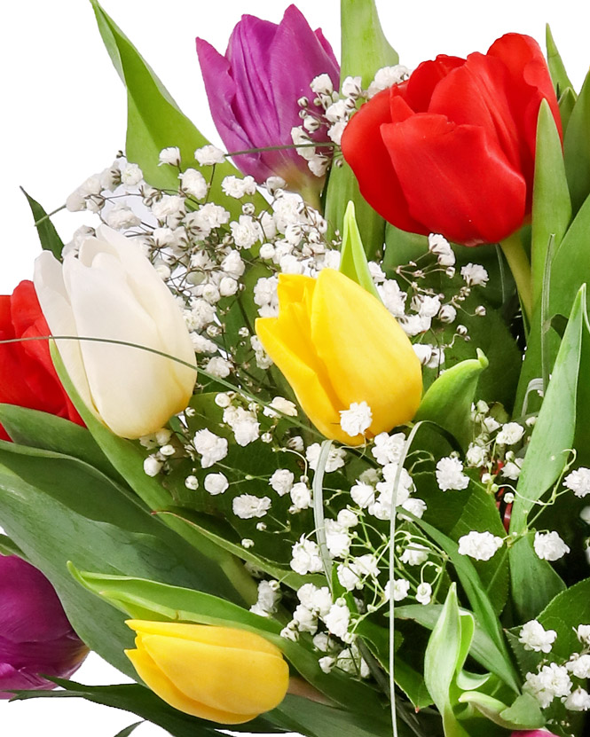 Tulips and gypsophilla bouquet