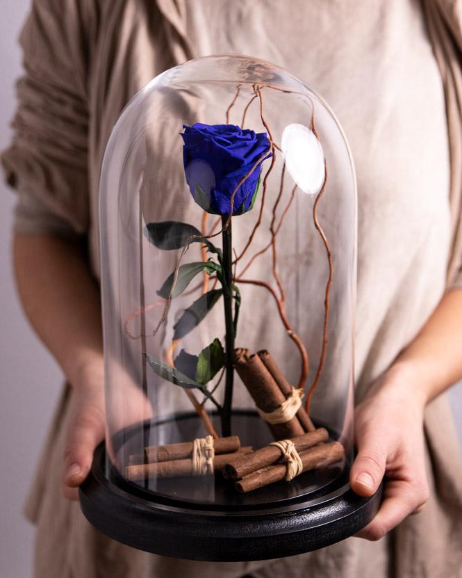 Trandafir criogenat albastru în cupolă
