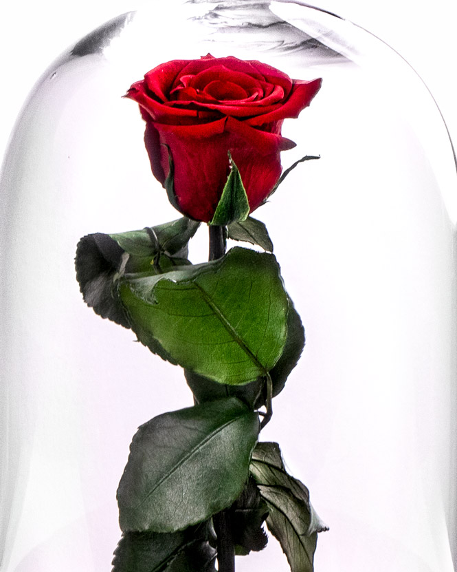 Cryogenic Rose Fairytale Gift