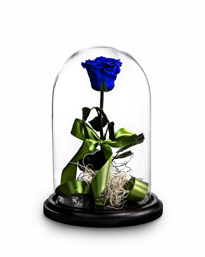 Trandafir criogenat albastru cu tillandsia