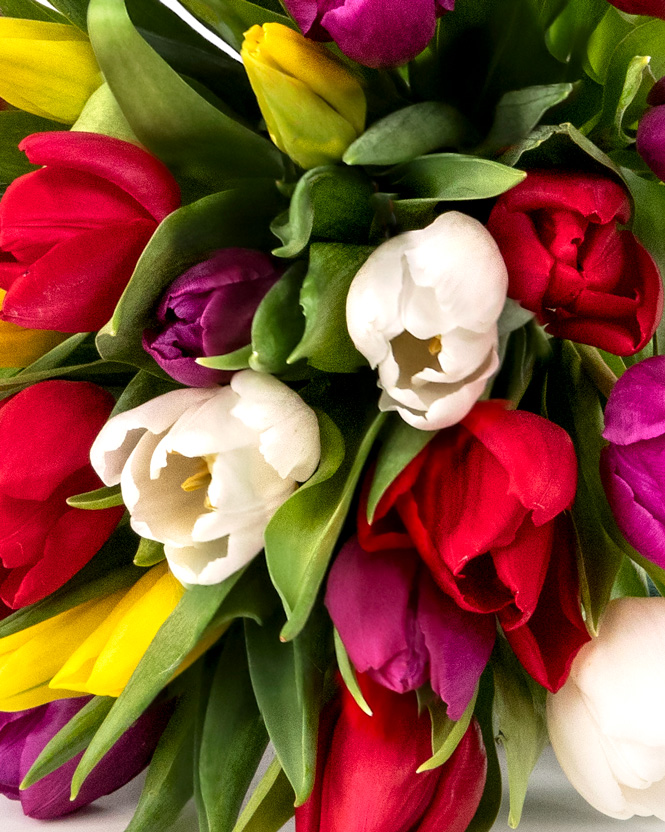 Multicolored tulips bouquet