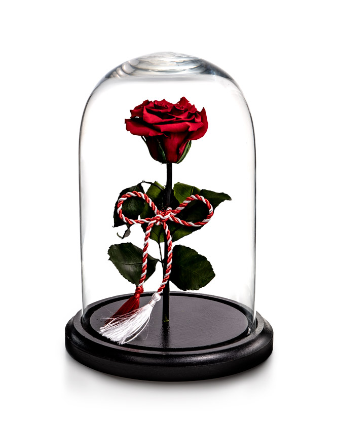 Preserved rose for 1st of March