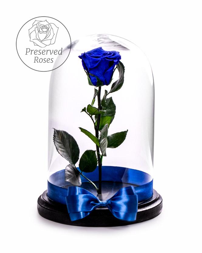 Blue preserved rose