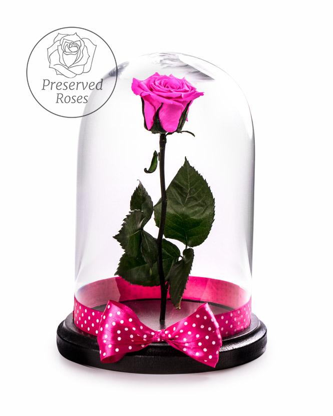 Pink preserved rose
