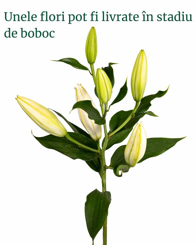Buchet funerar cu trandafiri și crini