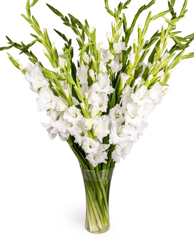 Buchet cu gladiole albe