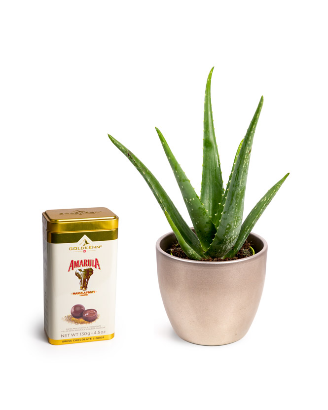 Aloe Vera și bomboane cu lichior Amarula