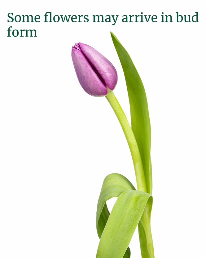 101 tulip bouquet