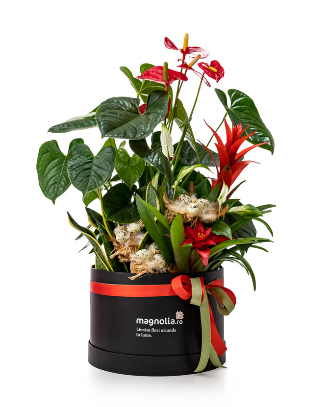 Easter Plant arrangement