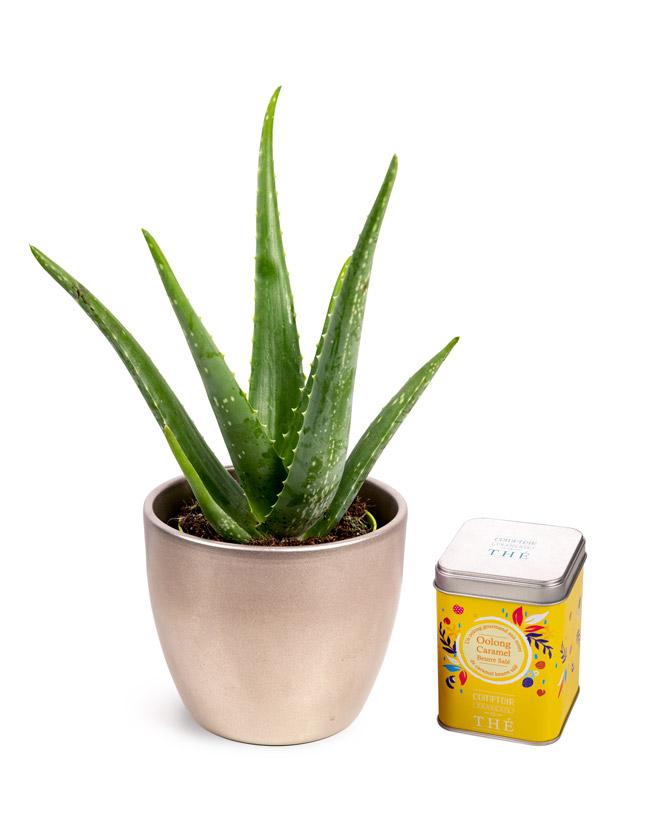 Aloe Vera și ceai Oolong cu caramel