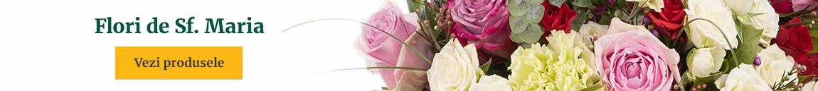 Flori de Sfânta Maria