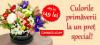 Cutie cu flori de primavara - Comanda online   Magnolia.ro