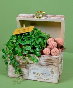 Aranjamente cu plante si accesorii