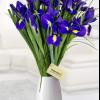 Ce spune despre tine floarea de primavara preferata