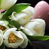 5 flori ideale pentru decorul mesei de Paste
