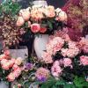 Cum sa verifici in 3 pasi daca florile pe care le cumperi sunt proaspete