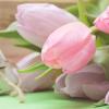 Flori de 8 Martie in functie de relatia cu persoana care le primeste