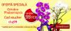 Promotie Phalaenopsis