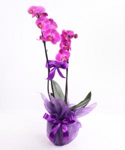 Aranjamente orhidee
