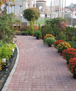 Plante ornamentale de exterior
