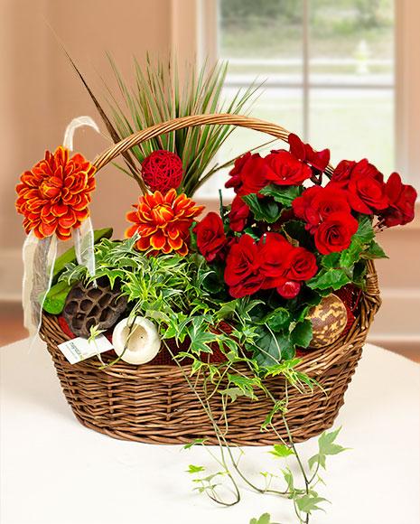 Aranjament cu plante mix