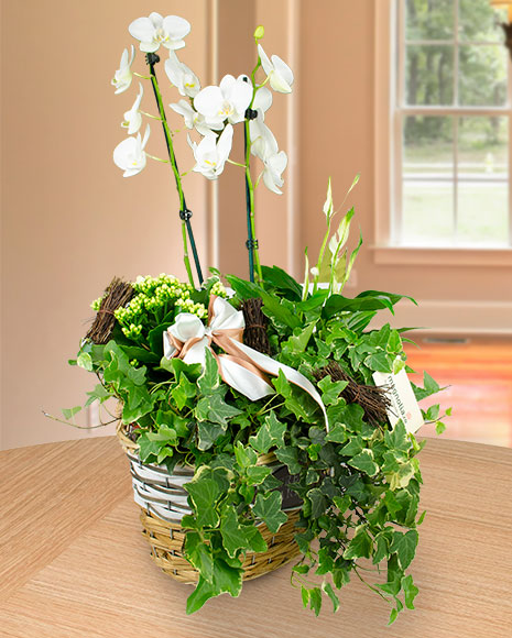 Aranjament in cos cu orhidee