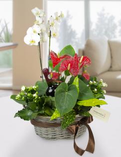 Aranjament cu plante și vin roșu