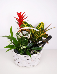 Basket with plants and sparkling wine