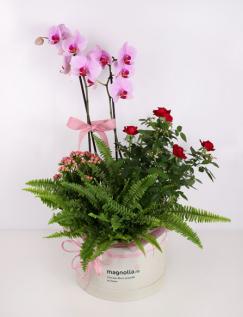 Aranjament in cutie cu orhidee