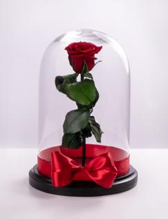 Trandafir Criogenat Cadou de Poveste