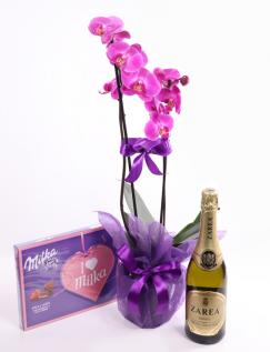 Violet Phalaenopsis orchid arrangement