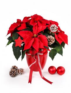 Aranjament Steaua Crăciunului cu accesorii